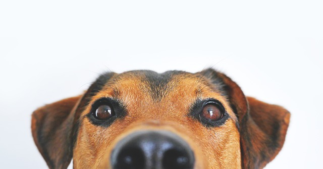 picture_of_dog